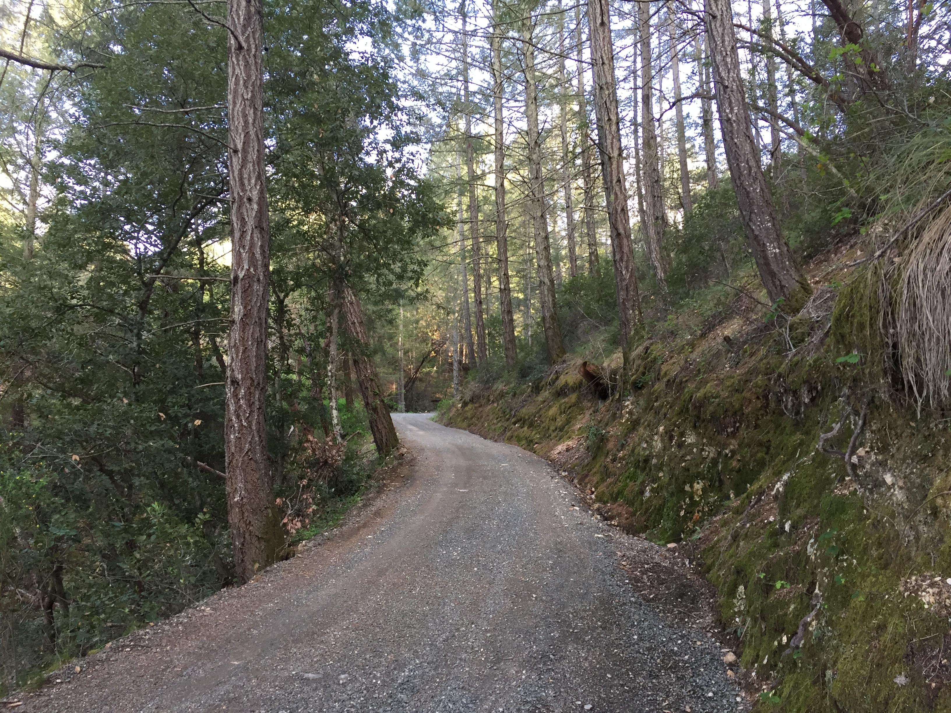 diamond mountain road forest